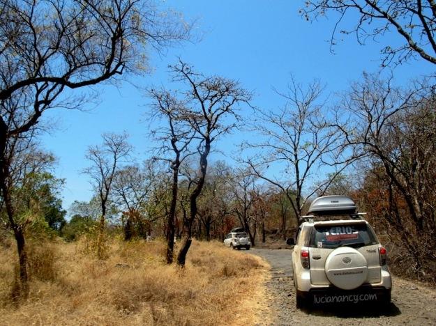 Sepanjang jalan masuk menuju Taman Nasional Baluran. Don't you love it?