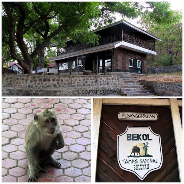 Pesanggerahan Bekol yang  paginya didatangi banyak monyet. Jangan dikasih makan ya supaya mereka nggak ganas kaya monyet-monyet di Uluwatu.