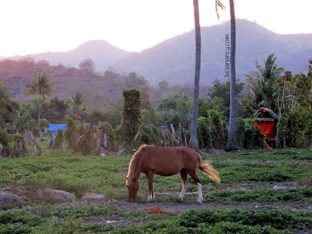 Ketemu kuda di tengah jalan bukan pemandangan yang asing di Sumbawa.