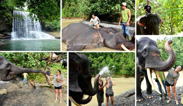 Happy time with the elephants! Senang bisa main bareng rajah di habitatnya sendiri, bukan di kebun binatang.
